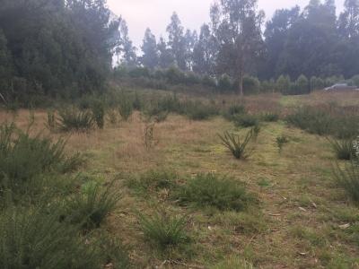 Venta de Parcela  en Valdivia, sector Las Parras, Valor $70.000.000