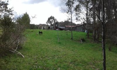 CentroCasas.cl Venta de Parcela en Valdivia, El Arenal